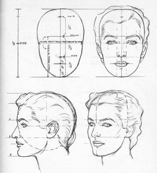 головы типов лица человека